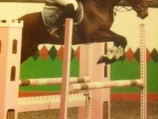 Show Jumpers horse - 5 yrs 6 mths 15.2 hh Bright Bay - Cumbria