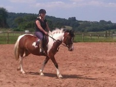 All Rounder horse - 7 yrs 13.2 hh Tri-Coloured - Worcestershire