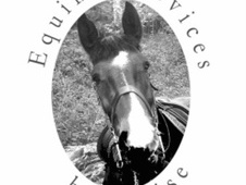 Equine Services By Louise - Cornwall