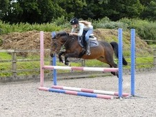 13. 2hh 15yrs ISH Bay Mare