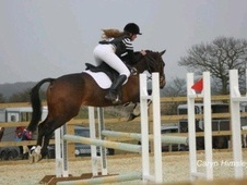 All Rounder horse - 10 yrs 11 mths 15.2 hh Bay - Essex