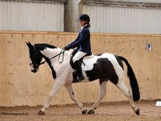 Exceptional Hunter, Dressage, All Rounder!