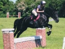 All Rounder horse - 8 yrs 15.2 hh Black - North Yorkshire