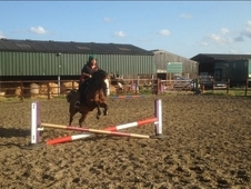 Stunning 13. 2 Welsh Sec C For Sale