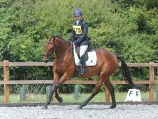 Event/Show jumper/P. C Team horse