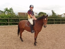 All Rounder horse - 5 yrs 1 mth 13.2 hh Bright Bay - Leicestershire