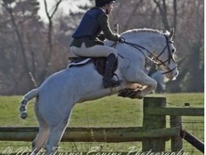 Genuine hunter all rounder pony