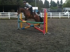 All Rounder horse - 19 yrs 14.3 hh Bay - Kent