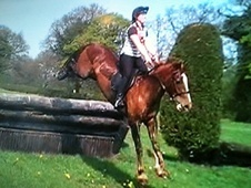 All Rounder horse - 10 yrs 15.2 hh Chestnut - Shropshire