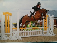 All Rounder horse - 10 yrs 7 mths 15.2 hh Bright Bay - West Midlands