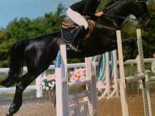 Rc/pc Fun Alrounder Showjumper 16hh