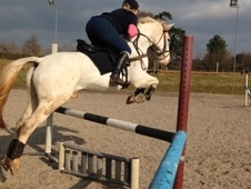 Dusty Roshoeve - 15HH Fun All-rounder