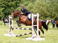 All Rounder horse - 5 yrs 10 mths 13.2 hh Bay - West Midlands