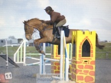 All Rounder horse - 8 yrs 16.1 hh Chestnut - North Yorkshire
