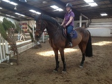 All Rounder horse - 10 yrs 11 mths 16.0 hh Bay - Lancashire
