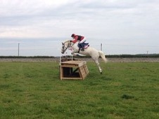 Misty- 14. 2 all rounder horse
