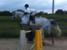 Lenny - 16hh All-rounder