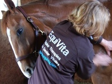 Equine Vitality - West Sussex