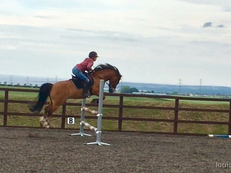 13h Welsh sec c gelding jumping pony