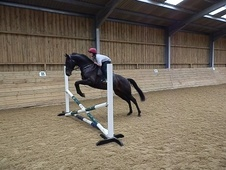 All Rounder horse - 6 yrs 16.1 hh Black - Somerset