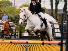 Beautiful Confidence Giving 14. 2hh All Rounder