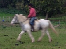 13. 1 H First Weight Carring Family Pony Carries Beginners / Novi...