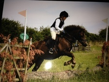 12hh Jumping Pony