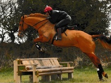 All Round Hunter And Eventer