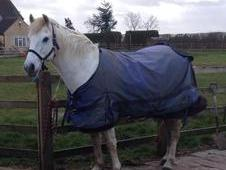 All Rounder - 14. 0hh Grey - 14 YO