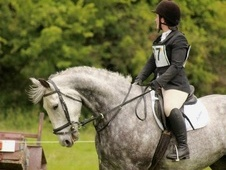 Hunters horse - 9 yrs 16.2 hh Grey - Tipperary