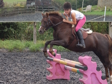 Brilliant All Rounder Pony