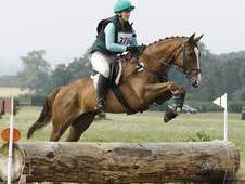 Competition Horse/all Rounder For Sale