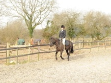 All Rounder horse - 4 yrs 13.3 hh Black - Hampshire
