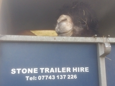 Hire/sales-ifor Williams Horse Trailer