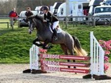 All Rounder horse - 4 yrs 16. 2 hh