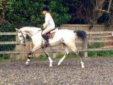 Potential Eventer/allrounder For Sale