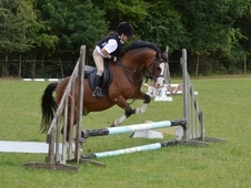12hh PC Lead rein, first ridden, confidence giver