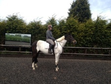 All Rounder horse - 9 yrs 16.0 hh Skewbald - Staffordshire