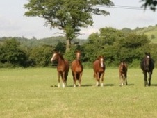 Looking For Good Equestrian Facilities Near Bristol? - Wiltshire