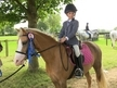 Lucy 12.2 stunning Registered Welsh Sec B Palomino all rounder