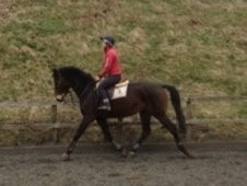 Dressage horse - 4 yrs 11 mths 16.2 hh Dark Bay - Kent