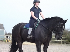 Mission 174cm 12 yr old gelding