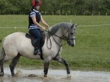 All Rounder horse - 7 yrs 11 mths 14.2 hh Grey - Northumberland