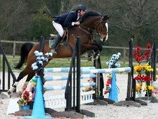 Show Jumpers horse - 7 yrs 16.1 hh Bay - East Sussex
