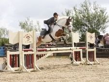 All Rounder horse - 7 yrs 15.3 hh Coloured - Nottinghamshire