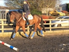 15. 2 Irish mare 5yrs - Lancashire