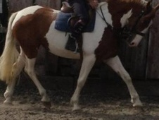 Nice allrounder mare
