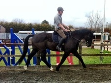 Dressage horse - 13 yrs 10 mths 17.1 hh Black - Oxfordshire