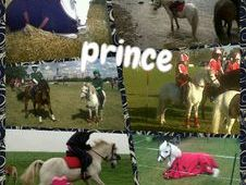 Prince Section A 1st And 2nd Pony