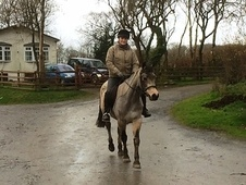Dusty 12yro 14hh Dun Class 1 Irish Connemara Mare